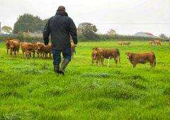 4 new farmers join AHDB Farm Excellence project