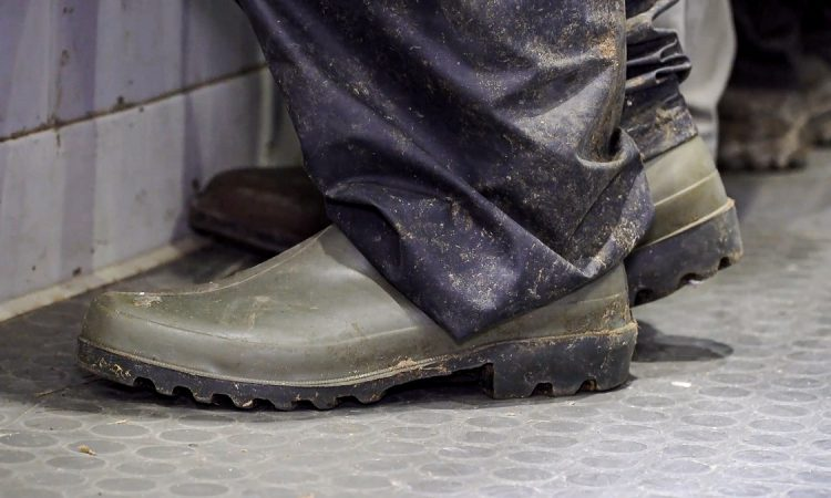 Boot cleaning reduces disease levels on livestock farms