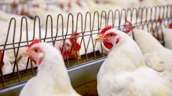 Poultry keepers urged to maintain highest possible standards of biosecurity