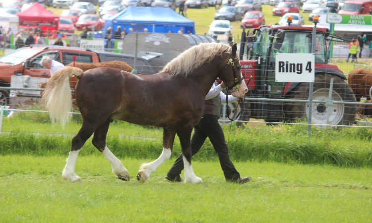 Armagh County Agricultural Show cancelled
