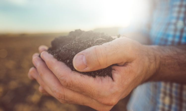 Chemical fertilisers reduce the level of bacteria in soil