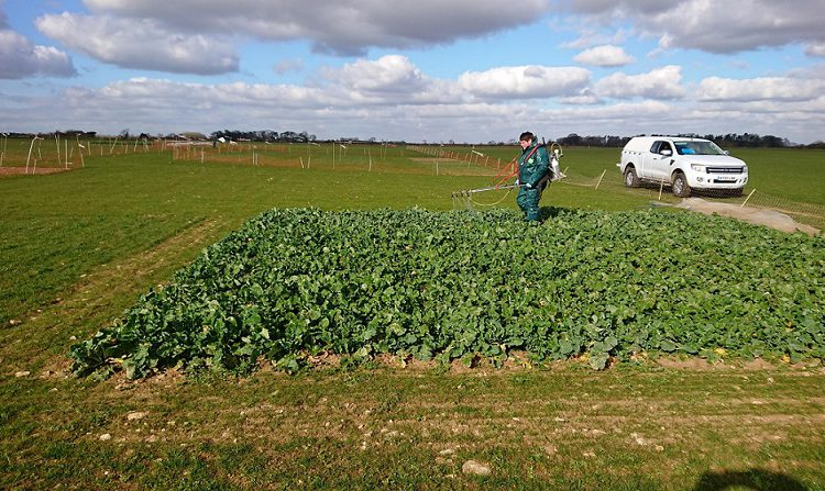 Cereals 2021 crop plots have wintered well ahead of planned show