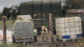 Proposals put forward for all-island animal cruelty register