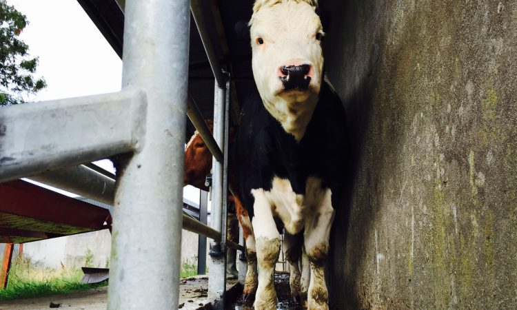 NI farmer convicted of tampering with TB test