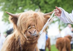 RHASS announce next generation judges for Royal Highland Showcase