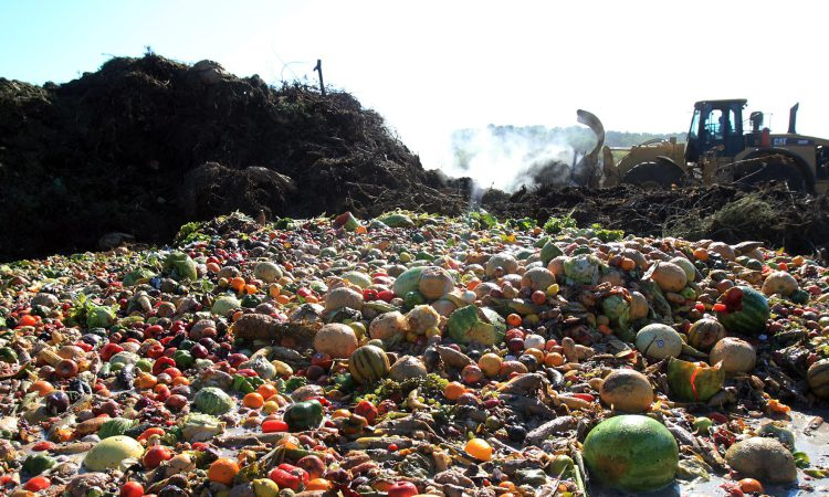 Minister Lyons calls for crackdown on food waste