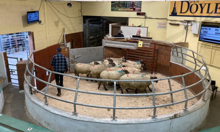 NI marts: Sellers permitted to return ringside on May 3