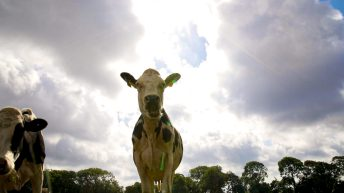 New Zealand government to phase out live exports by sea