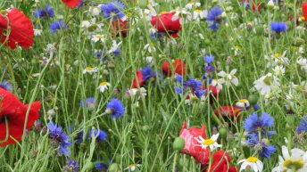 Last chance for farmers in the Midlands to apply for on-farm biodiversity grant