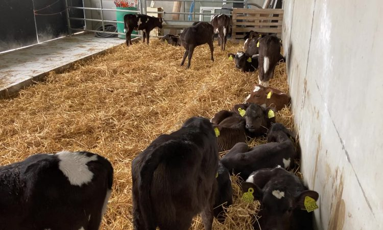 Are you having issues with calf scour?