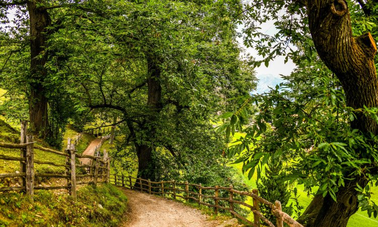 Approval given for greater protection for sweet chestnut trees in England