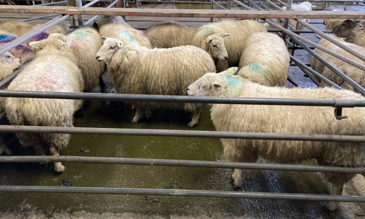 Shipments of Irish sheepmeat to the UK fall again