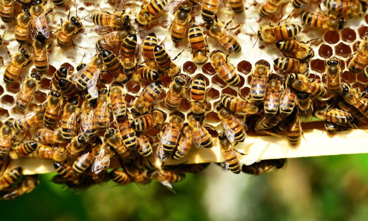 Marks and Spencer to introduce 30 million bees to British farms