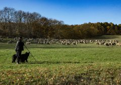 NSA Next Generation Shepherd competition finalists step up to compete once again