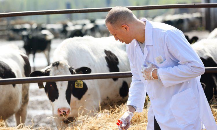 NI veterinary school: 200 vets needed for Brexit checks