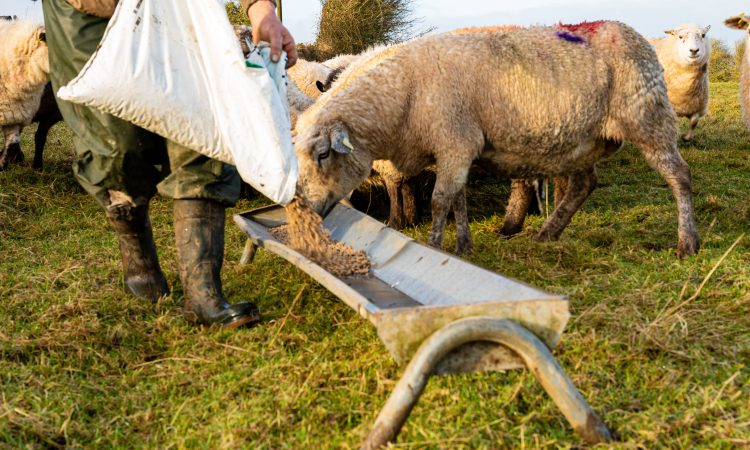 'Guardians of the Welsh Land' campaign to highlight positive impact of farming on the environment