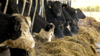 Slight increase in TB incidence rates in herds across England