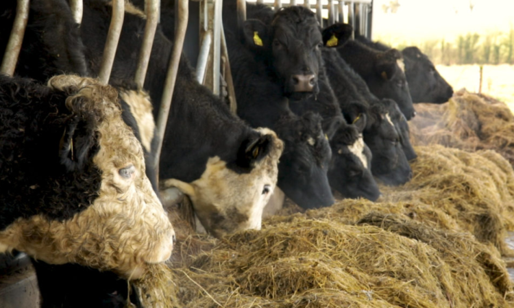 Business plan completed for NI's new bovine TB strategy