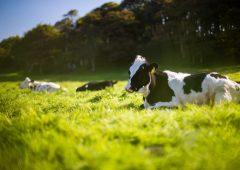 Effective parasite control crucial for a successful grazing season