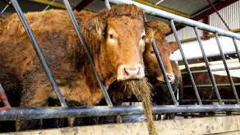 NI customers buy over 50,000 cattle from the Republic this year
