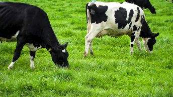 Global dairy markets: 'Steady as she goes' according to AHDB