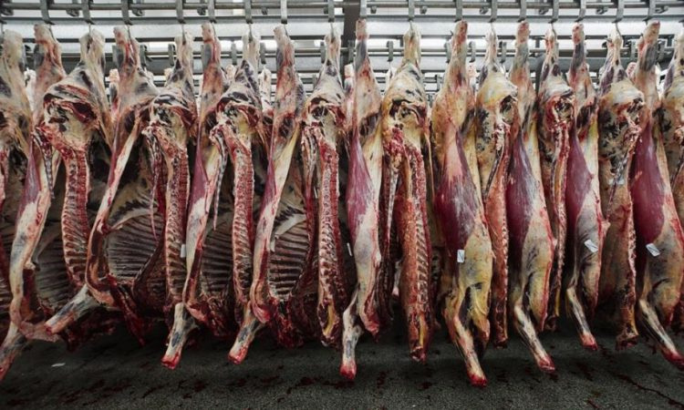 NI Agriculture Minister to seek PGI status for British Grass Fed Beef