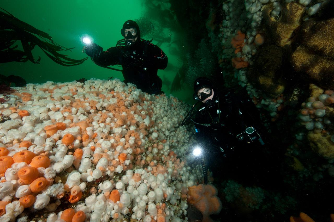 Seilende i et av verdens vakreste steder under vann. Fargene er overalt. Derfor tar også dykkerne drøssevis av bilder, i håp om at andre også skal forelske seg. Foto: Vebjørn Karlsen