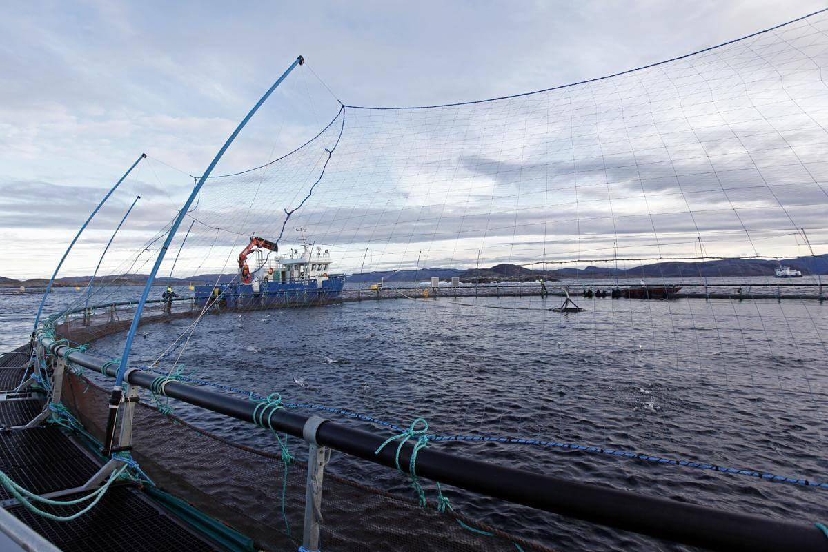 Havbruksnæringa i Flatanger og resten av landet må forberede seg på strengere krav for å redusere problemene med lakselus og rømning. (Arkivbilde)