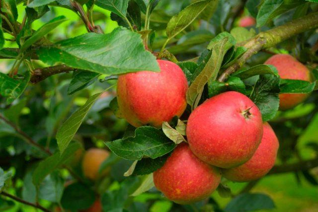 2010: Love Local - Apples
