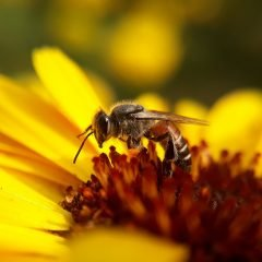 Image of - Making a B-Line for Pollinators