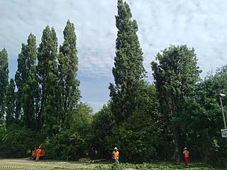 Bearleaf - vegetation control in Surrey