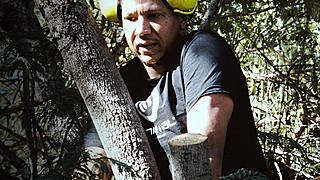 Bearleaf - Tree work