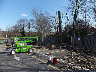 Bearleaf - Industrial tree work