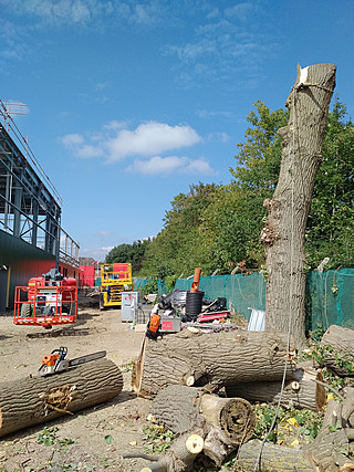 Bearleaf - Industrial tree work in Surrey