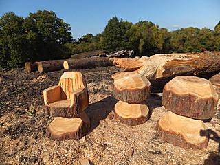 Bearleaf - Tree carving