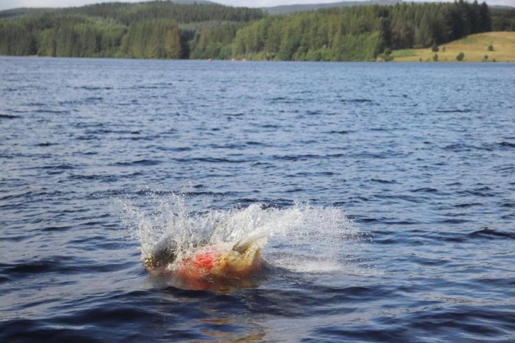 Kielder Water Forest 098 resize