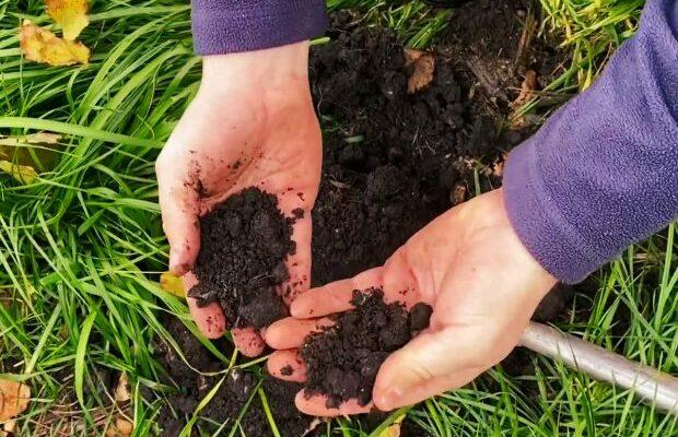 Farmer holds low-till soil