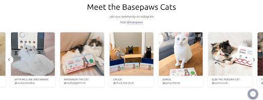 basepaws kitty community