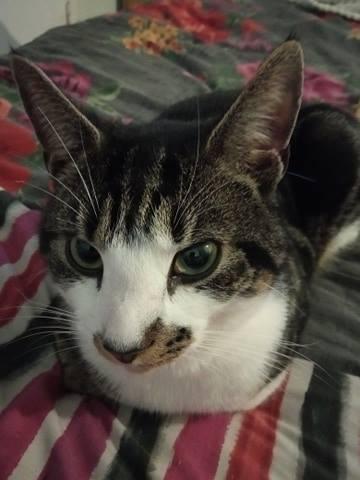 Missing Cat - Leo
