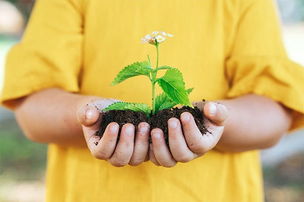 Child holding a pile of soil with a flower growing out of it
