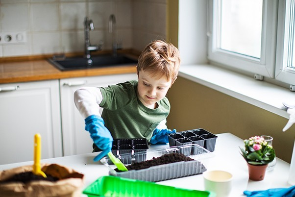 Child planting seeds into a propogation pot in a kitchen