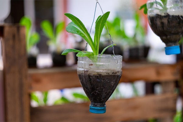 Plastic bottle being repurposed for a plant pot