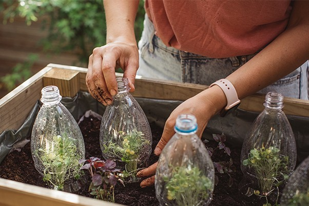 Person reusing plastic bottles in a planter
