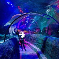 A parent and toddler stand in an aquarium tunnel looking at the fish at sea life loch lomond