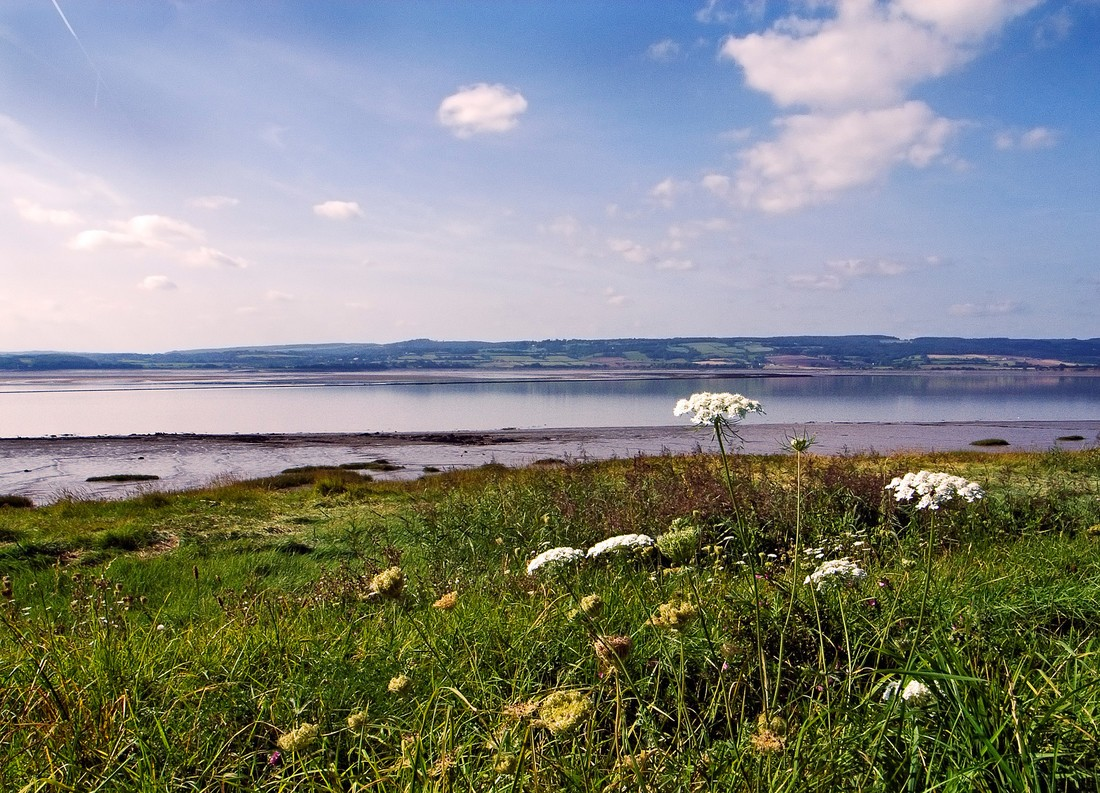 Wildflowers are in the foreground with a view of the sea and hills on the horizon