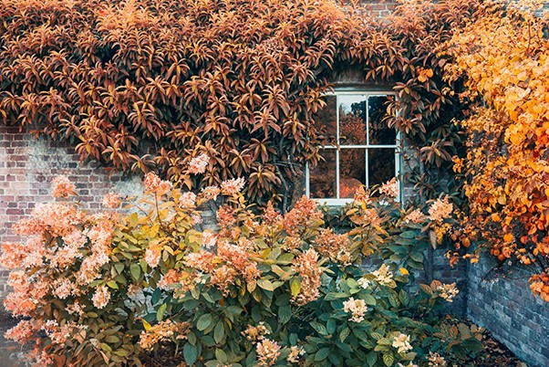 Autumn flowers and ivy on a historical house, hues of yellows and oranges
