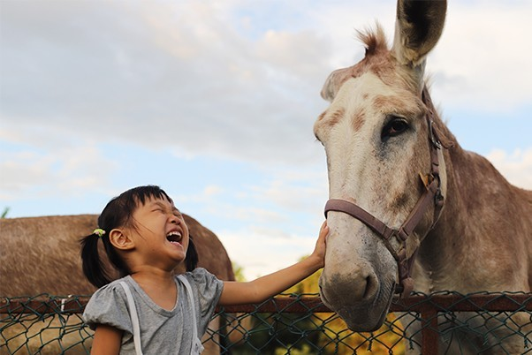 A little girl laughs gleefully as she pets a donkey at the zoo