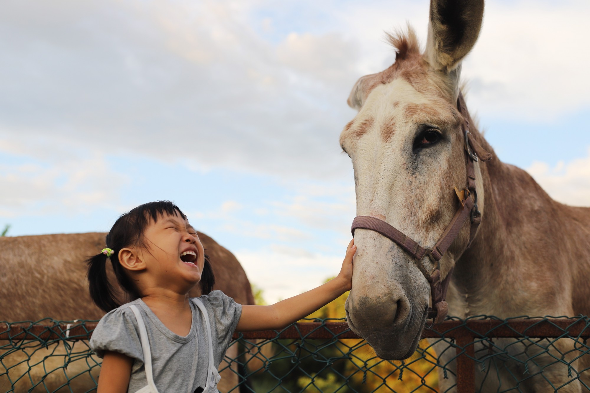 Young girl feeding a giraffe