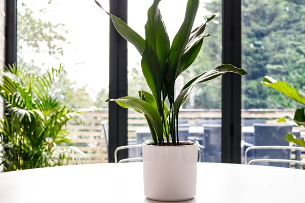 A plant in a white pot on a table
