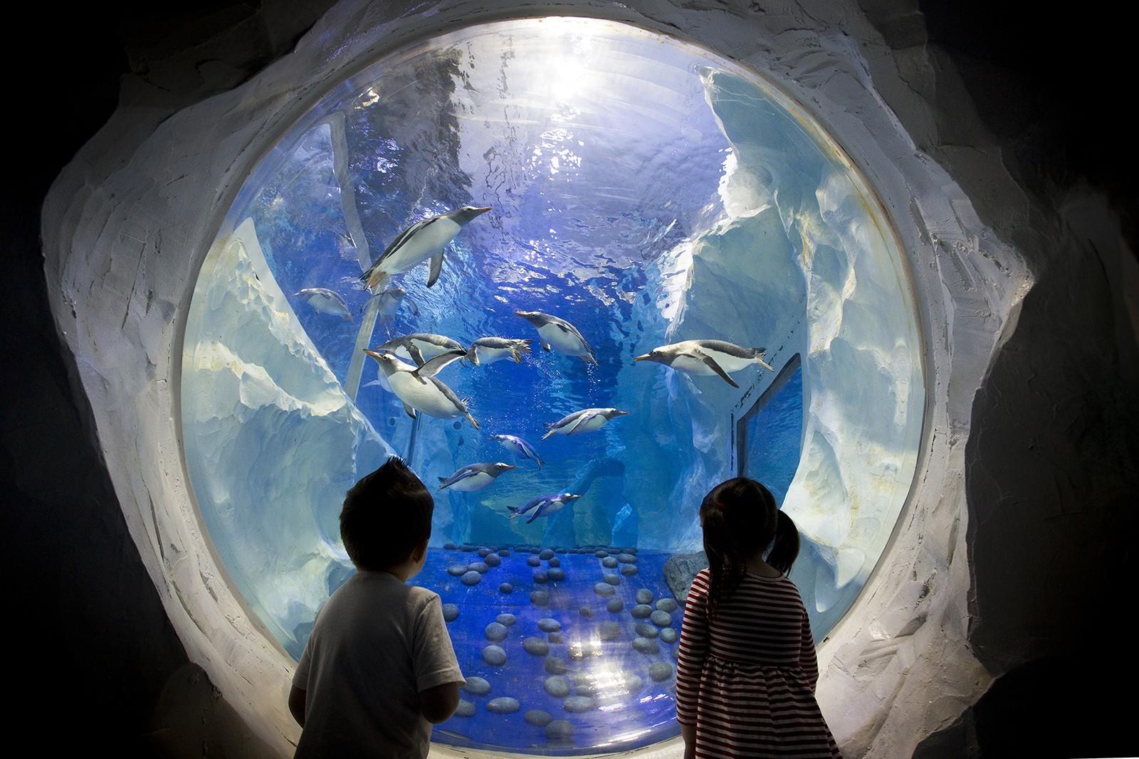 Two children looking through an aquarium glass